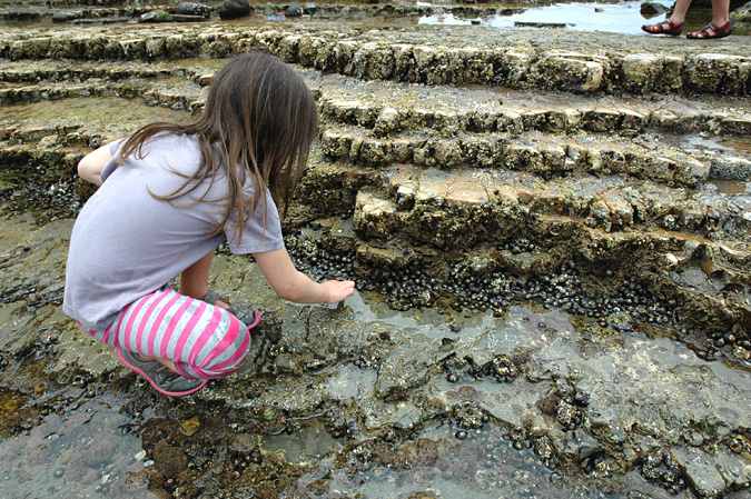 Abalone Cove tidepools rock habitat
