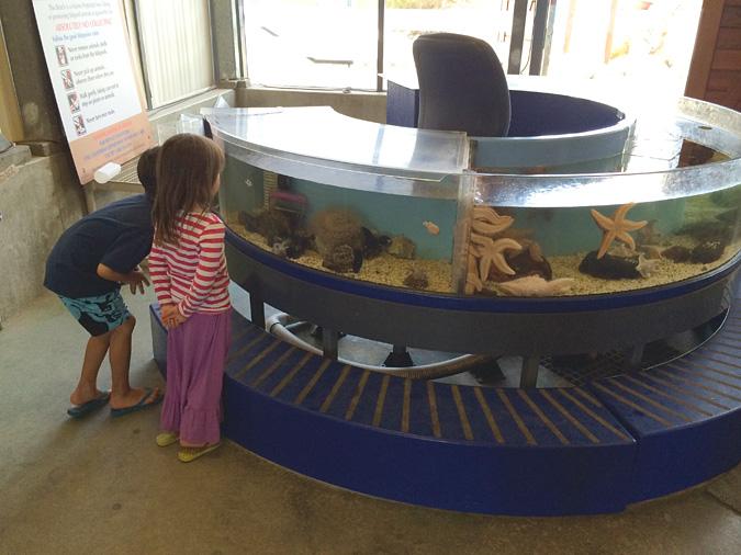 Ocean Institute touch tank