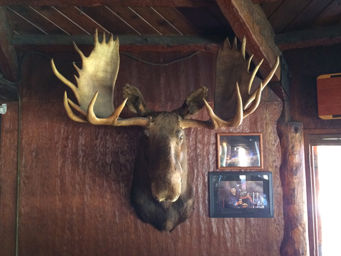 An unlucky moose in the Mt Baldy Lodge dining room