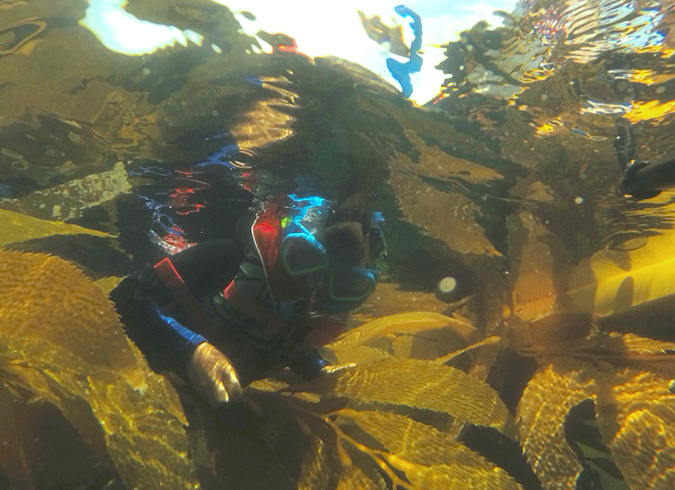 My son snorkeling in the kelp off Crystal Cove beach