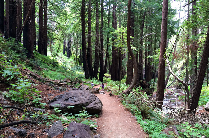 The trail to the falls, Limekiln State Park, Big Sur