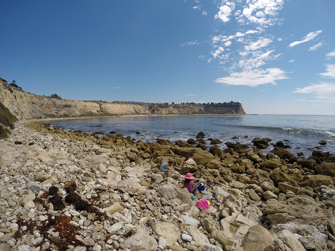 I tried fishing from the rocks at the North end of the cove, but there is so much kelp that it wasn't really possible