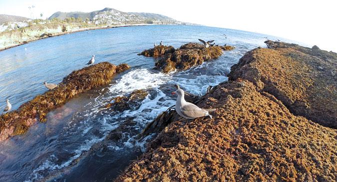 Lots of sea birds around Goff Island, Victoria Beach
