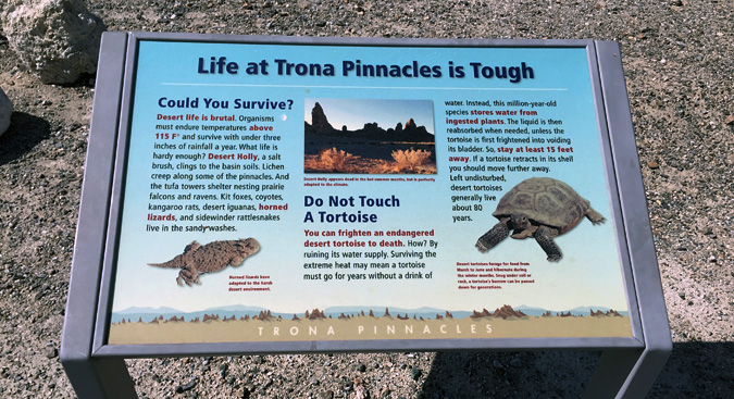 Apparently if you startle a tortoise, it pees itself, and then dies