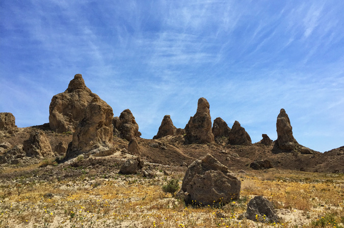 Blooming wildflowers at the Trona Pinnacles